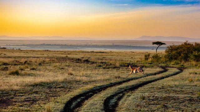 Les adresses à retenir durant un voyage au Kenya