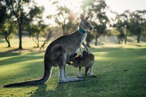 Voyager en van en Australie : ce que vous devez connaître