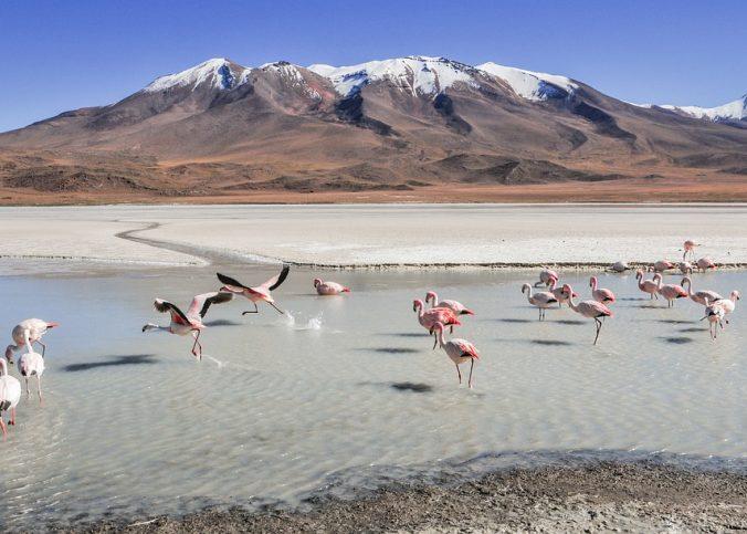 En route vers le territoire bolivien pour s'adonner à l'écotourisme