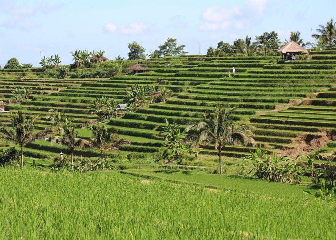 L'Indonésie, une destination de choix pour s'adonner à diverses distractions